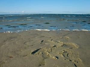sanchin sand cape cod